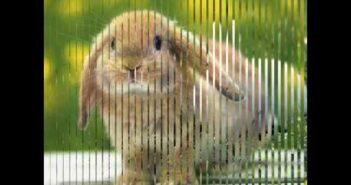 Coelhinho da Páscoa com letras - baixar - vídeo