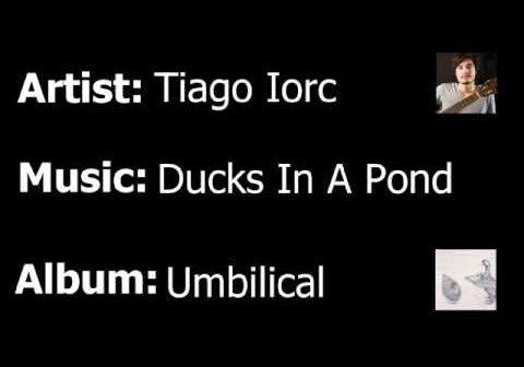 Ducks In a Pond com letras - baixar - vídeo